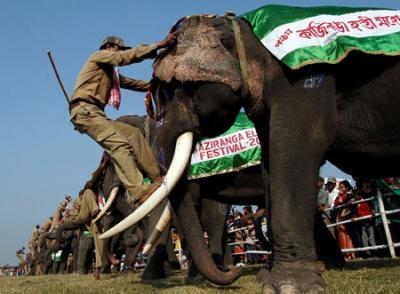 Kaziranga Elephant Festival