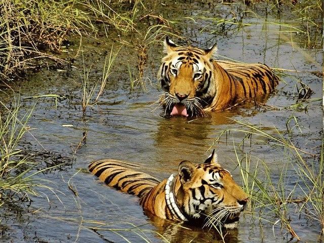 Manas National Park Wildlife Tour