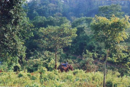 Dense forest of amchang wildlife sanctuary