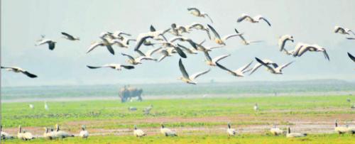Birds in Panidihing Bird Sanctuary