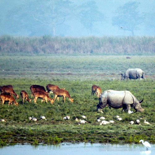 Rhino and Deer in Kaziranga National Park