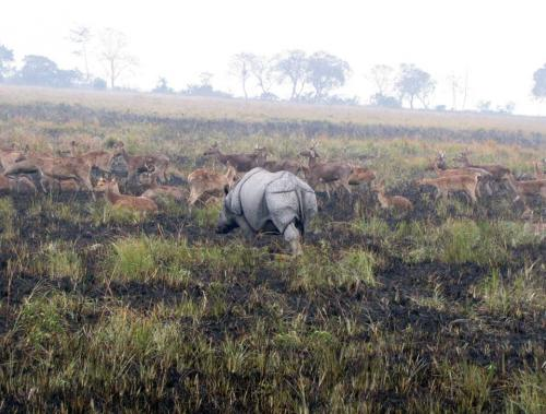 Deer and Rhinos together in kaziranga national park
