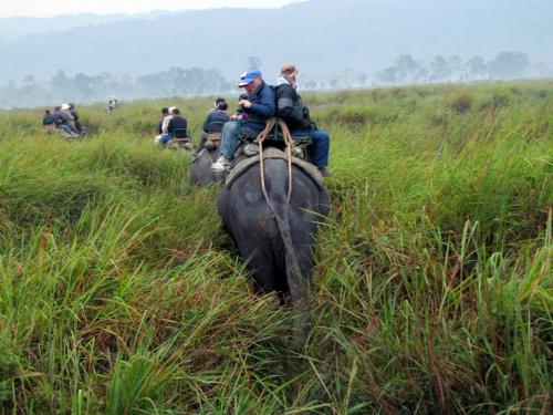 Foreign Tourist enjoy elephant safari to view Rhinos in kaziranga national park