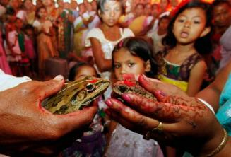 Bhekuli Biya Or Frog Weddings in Assam