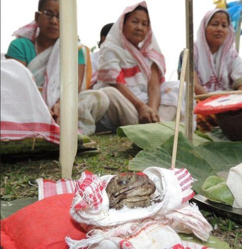 Bhekuli Biya Or Frog Weddings in Assam