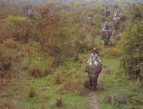 Elephat safari at Manas National Park