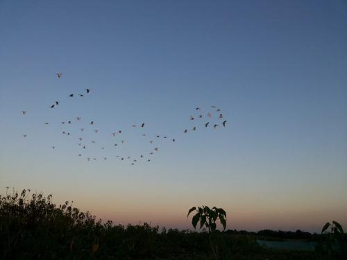 Panidihing Bird Sanctuary