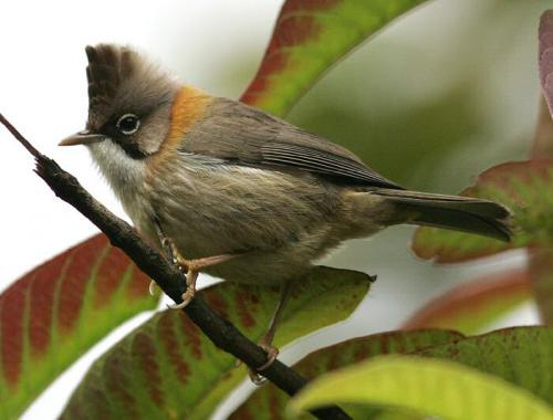 Birds at Manas National Park