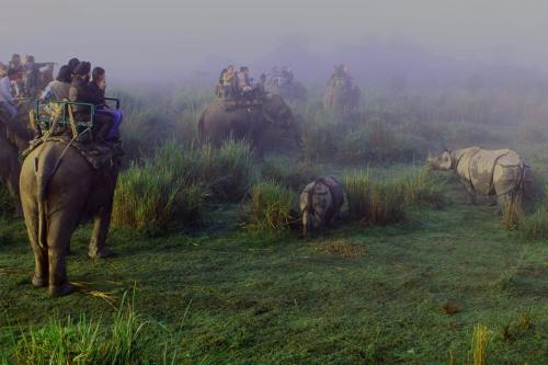 Tourist Enjoying Elephant Safari In Kaziranga National Park
