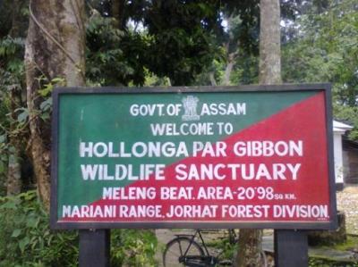 Hollongapar Gibbon Wildlife Sanctuary Or Gibbon Wildlife Sanctuary