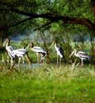 Panidihing Bird Sanctuary