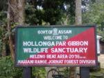 Hollongapar Gibbon Wildlife Sanctuary Or Gibbon Wildlife Sanctuary