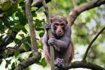 Bherjan - Borajan - Padumoni Wildlife Sanctuary